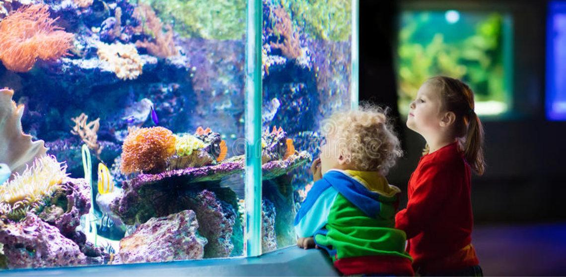 Starting a Saltwater Marine Aquarium