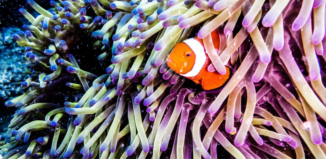 Reef Keepers Top Tips